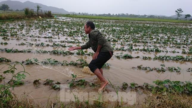 Hậu bão số 6: Người Đắk Lắk 'buốt ruột' khi tài sản, hoa màu mất trắng ảnh 2