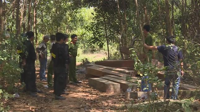 Đắk Lắk: Bắt 4 cán bộ công ty lâm nghiệp vì để mất rừng ảnh 1