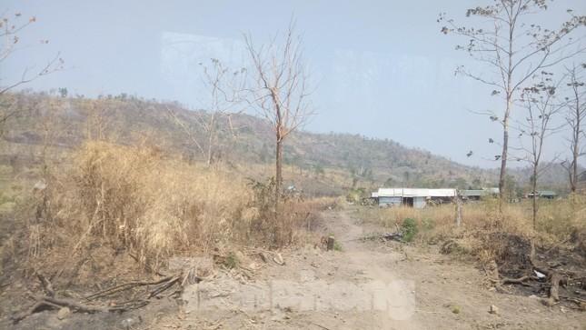 Hơn 22 nghìn ha rừng ở Đắk Lắk bị xóa sổ ra sao? ảnh 2