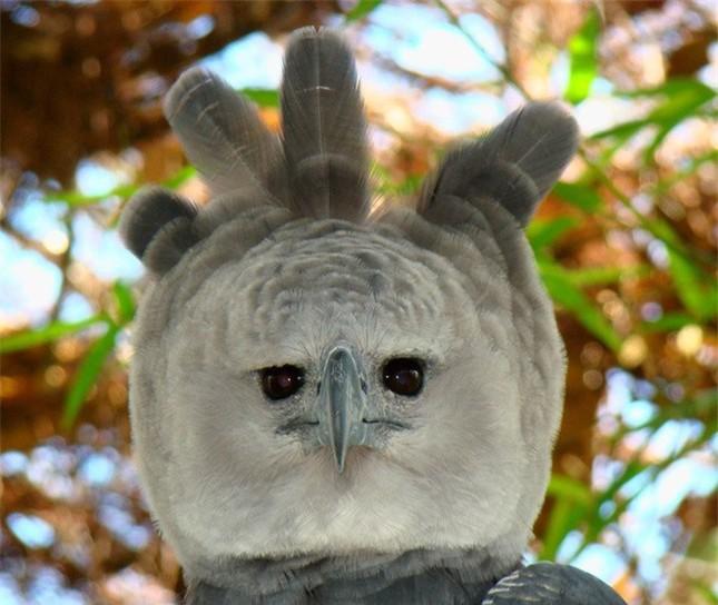 10 con vật có ngoại hình kỳ dị mà ít người biết tới ảnh 8
