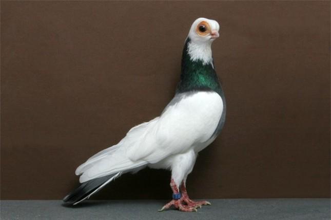 10 con vật có ngoại hình kỳ dị mà ít người biết tới ảnh 1