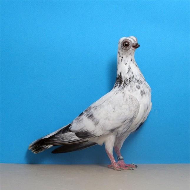 10 con vật có ngoại hình kỳ dị mà ít người biết tới ảnh 2