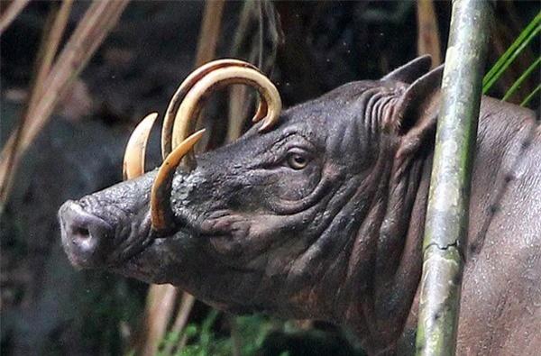 10 con vật có ngoại hình kỳ dị mà ít người biết tới ảnh 9
