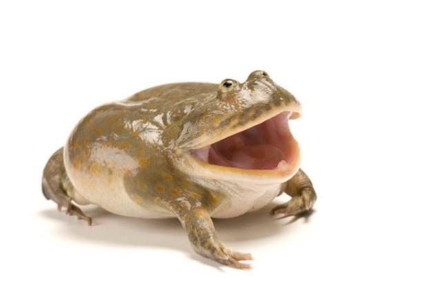 10 con vật có ngoại hình kỳ dị mà ít người biết tới ảnh 11