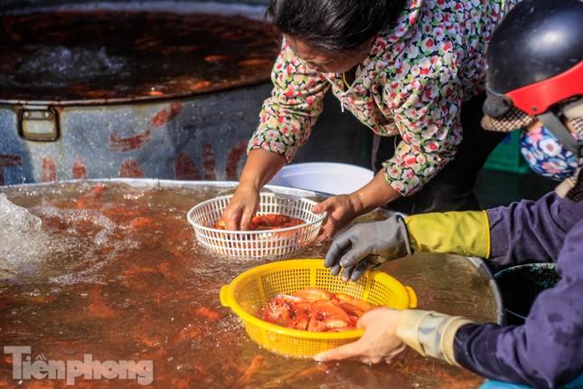 Chợ cá lớn nhất Hà Nội tất bật trước ngày ông Công ông Táo ảnh 1