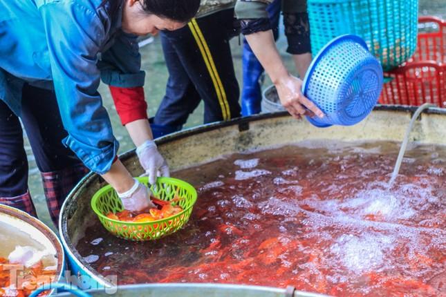 Chợ cá lớn nhất Hà Nội tất bật trước ngày ông Công ông Táo ảnh 2