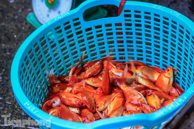 Chợ cá lớn nhất Hà Nội tất bật trước ngày ông Công ông Táo ảnh 5