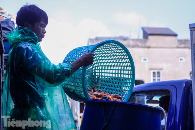 Chợ cá lớn nhất Hà Nội tất bật trước ngày ông Công ông Táo ảnh 6