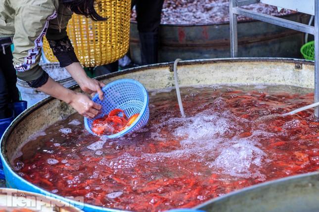 Chợ cá lớn nhất Hà Nội tất bật trước ngày ông Công ông Táo ảnh 10