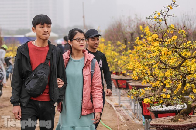 Mai vàng 'đổ bộ' phố phường Hà Nội ngày cận Tết ảnh 8