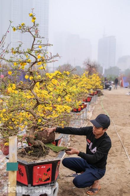 Mai vàng 'đổ bộ' phố phường Hà Nội ngày cận Tết ảnh 9