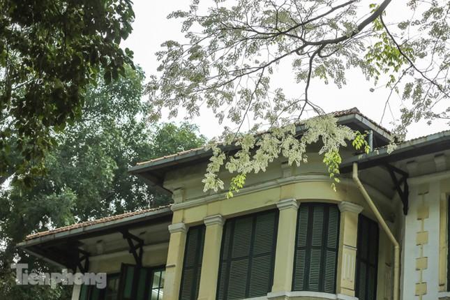 Hà Nội 'nhuộm' trắng tinh khôi với màu hoa sưa ảnh 7