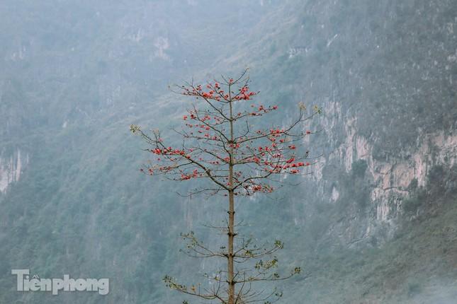 Ngẩn ngơ mùa hoa gạo vùng cao nguyên đá Hà Giang ảnh 10