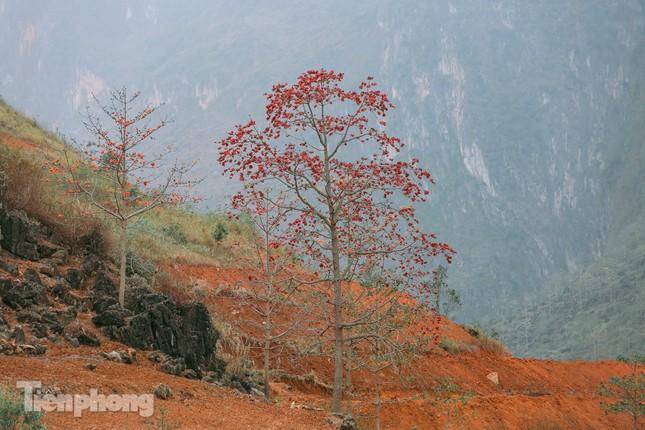 Ngẩn ngơ mùa hoa gạo vùng cao nguyên đá Hà Giang ảnh 11