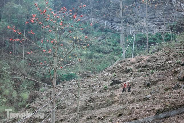 Ngẩn ngơ mùa hoa gạo vùng cao nguyên đá Hà Giang ảnh 13