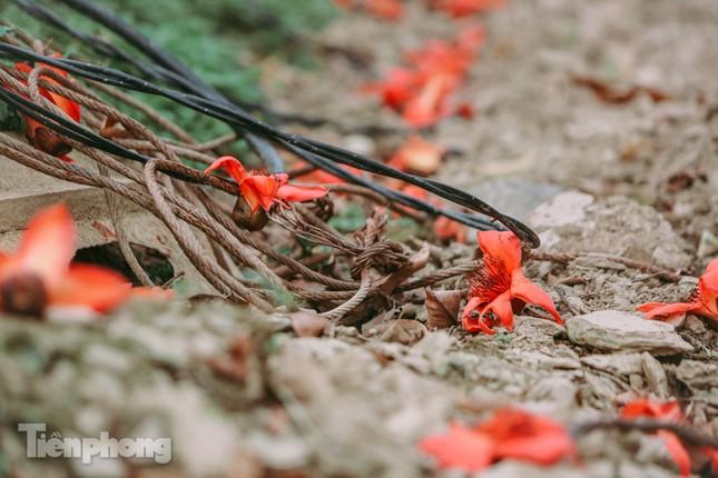 Ngẩn ngơ mùa hoa gạo vùng cao nguyên đá Hà Giang ảnh 14