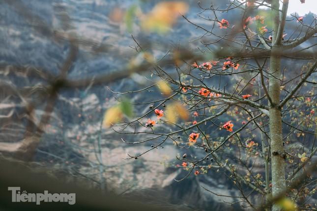 Ngẩn ngơ mùa hoa gạo vùng cao nguyên đá Hà Giang ảnh 15