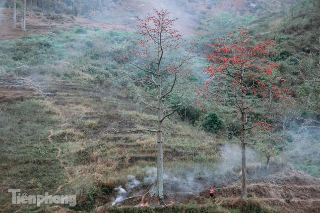 Ngẩn ngơ mùa hoa gạo vùng cao nguyên đá Hà Giang ảnh 16