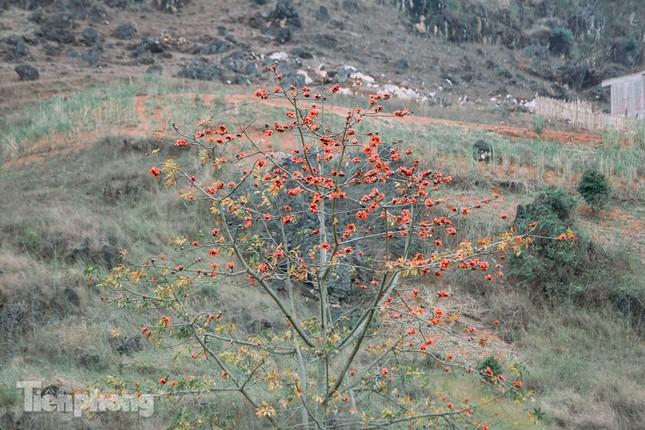 Ngẩn ngơ mùa hoa gạo vùng cao nguyên đá Hà Giang ảnh 17