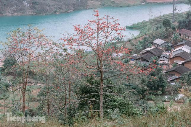 Ngẩn ngơ mùa hoa gạo vùng cao nguyên đá Hà Giang ảnh 1