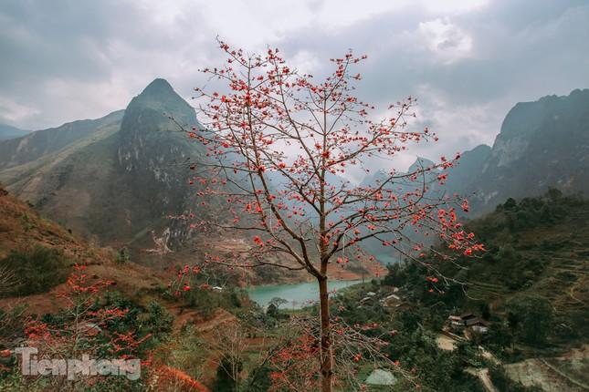 Ngẩn ngơ mùa hoa gạo vùng cao nguyên đá Hà Giang ảnh 2