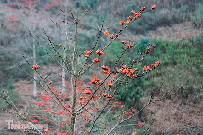 Ngẩn ngơ mùa hoa gạo vùng cao nguyên đá Hà Giang ảnh 3