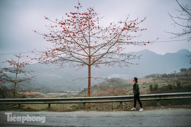 Ngẩn ngơ mùa hoa gạo vùng cao nguyên đá Hà Giang ảnh 4