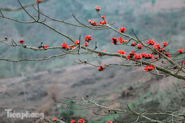 Ngẩn ngơ mùa hoa gạo vùng cao nguyên đá Hà Giang ảnh 5