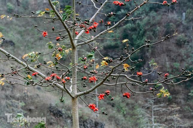 Ngẩn ngơ mùa hoa gạo vùng cao nguyên đá Hà Giang ảnh 7