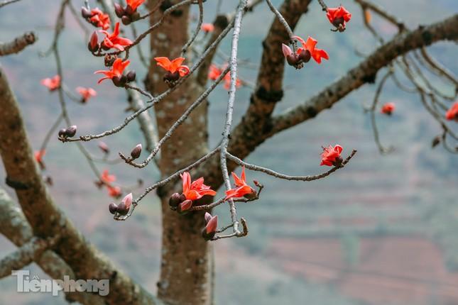 Ngẩn ngơ mùa hoa gạo vùng cao nguyên đá Hà Giang ảnh 8