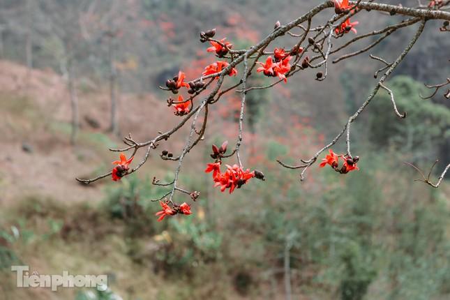 Ngẩn ngơ mùa hoa gạo vùng cao nguyên đá Hà Giang ảnh 9