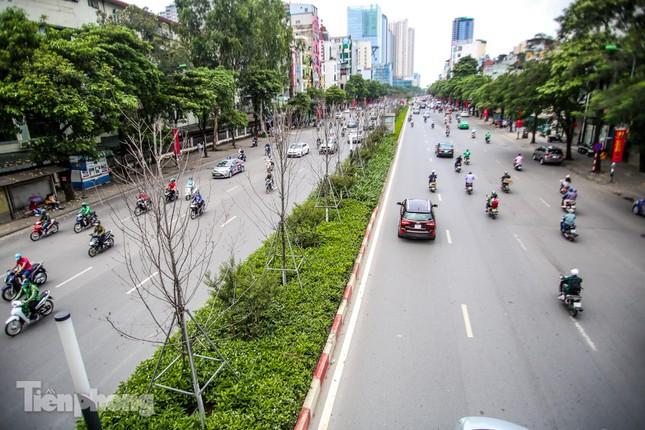 Hàng phong lá đỏ ở phố trung tâm Hà Nội giờ ra sao? ảnh 1