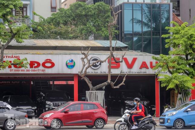 Được 'cấp cứu' liên tục, hàng sưa đỏ phố Nguyễn Văn Huyên vẫn héo úa ảnh 5