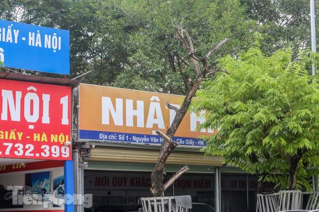 Được 'cấp cứu' liên tục, hàng sưa đỏ phố Nguyễn Văn Huyên vẫn héo úa ảnh 7