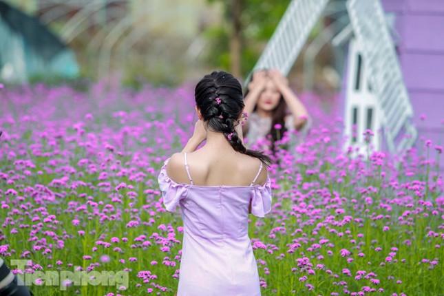 Thảm hoa tím lãng mạn ở Hà Nội hút đông đảo nữ sinh đến 'check-in' ảnh 10