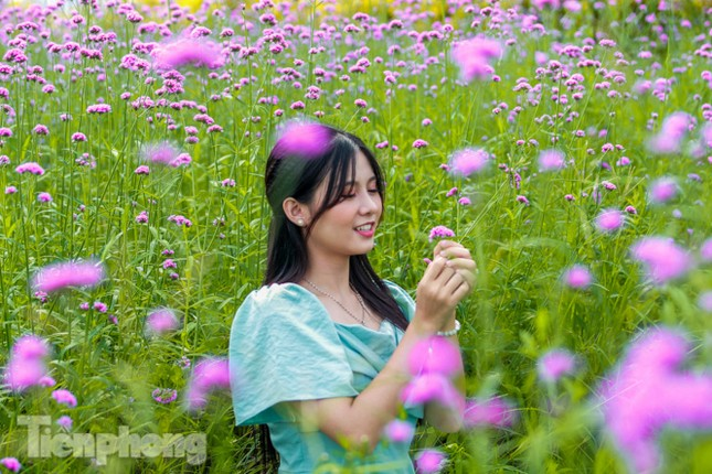 Thảm hoa tím lãng mạn ở Hà Nội hút đông đảo nữ sinh đến 'check-in' ảnh 5