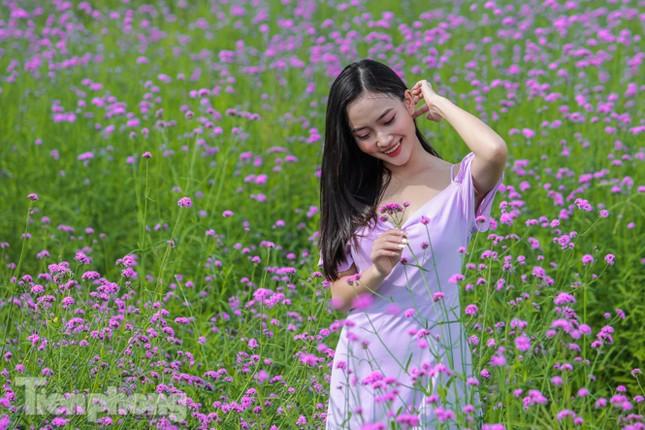 Thảm hoa tím lãng mạn ở Hà Nội hút đông đảo nữ sinh đến 'check-in' ảnh 6