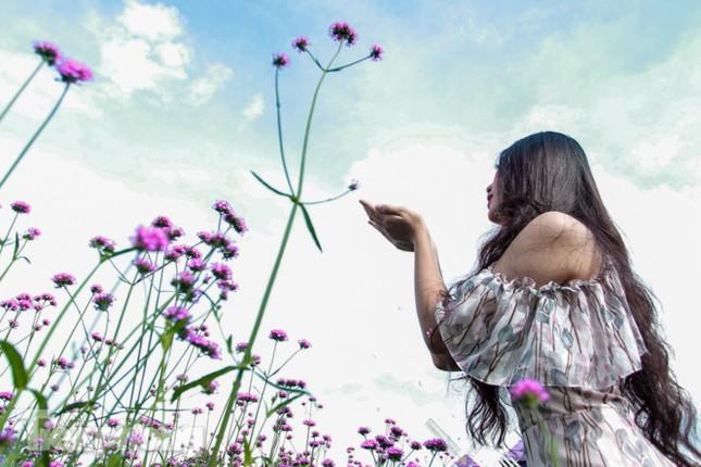 Thảm hoa tím lãng mạn ở Hà Nội hút đông đảo nữ sinh đến 'check-in' ảnh 7