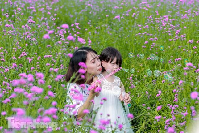 Thảm hoa tím lãng mạn ở Hà Nội hút đông đảo nữ sinh đến 'check-in' ảnh 9