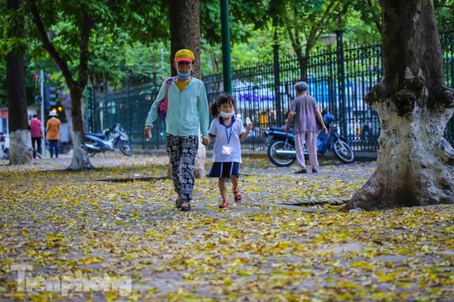 Lá phủ vàng con phố trong tiết trời chuyển sang thu ở Hà Nội ảnh 10