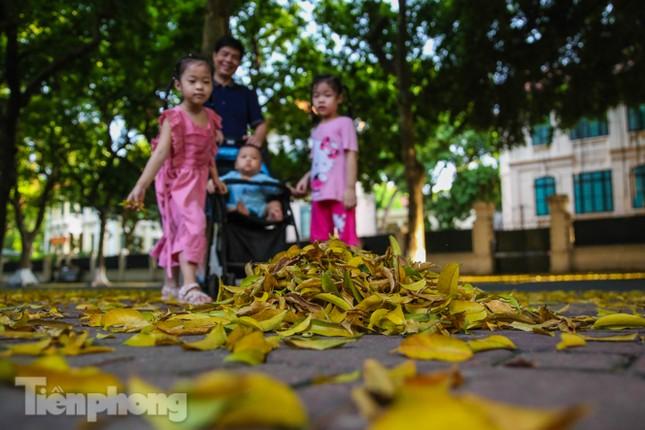 Lá phủ vàng con phố trong tiết trời chuyển sang thu ở Hà Nội ảnh 2