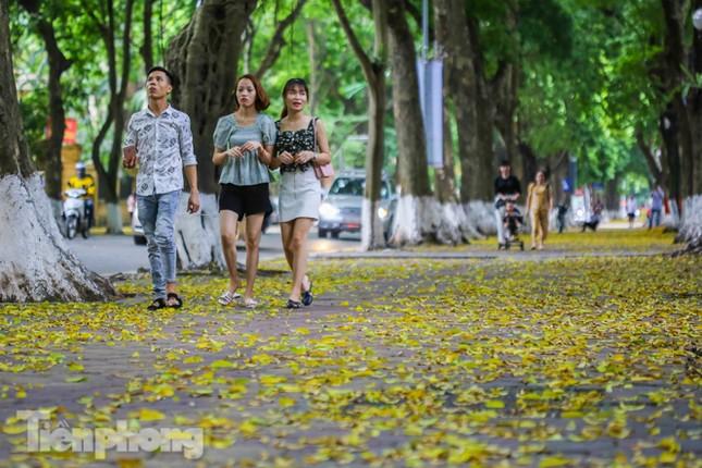 Lá phủ vàng con phố trong tiết trời chuyển sang thu ở Hà Nội ảnh 5