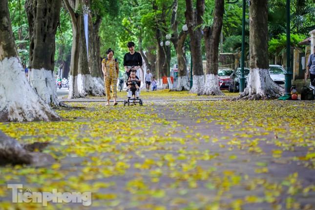 Lá phủ vàng con phố trong tiết trời chuyển sang thu ở Hà Nội ảnh 6