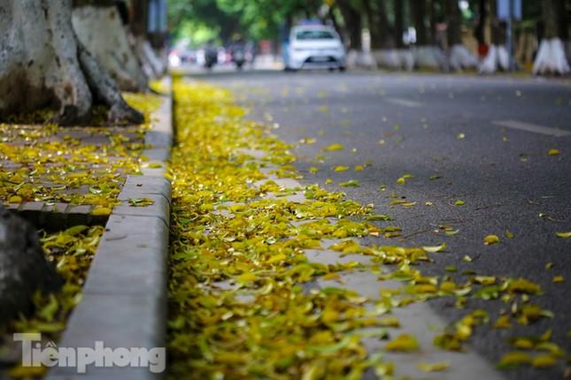 Lá phủ vàng con phố trong tiết trời chuyển sang thu ở Hà Nội ảnh 9