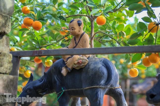 Độc đáo quất bonsai 'ngự' trên lưng trâu giá chục triệu ảnh 8