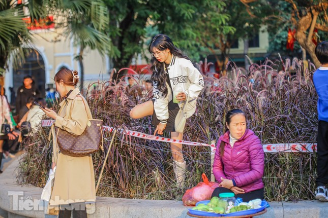 Ngất lịm trước cỏ lau màu tím bên bờ hồ Hoàn Kiếm ảnh 10