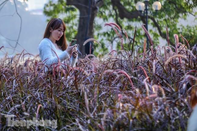 Ngất lịm trước cỏ lau màu tím bên bờ hồ Hoàn Kiếm ảnh 8