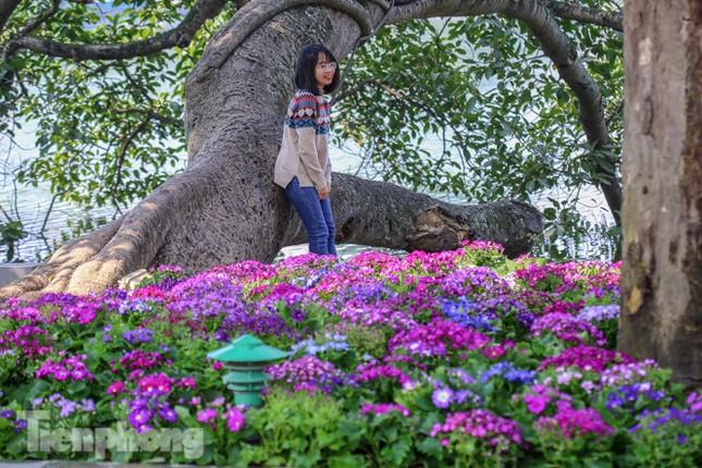 Hà Nội rực rỡ hoa chào mừng Đại hội Đảng lần thứ XIII ảnh 10