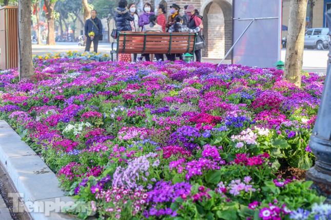Hà Nội rực rỡ hoa chào mừng Đại hội Đảng lần thứ XIII ảnh 1