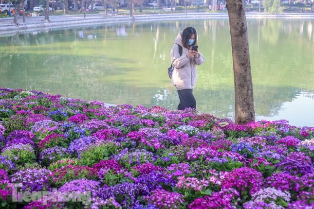 Hà Nội rực rỡ hoa chào mừng Đại hội Đảng lần thứ XIII ảnh 4
